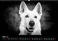 Dogs - Black & White (Wandkalender 2019 DIN A2 quer) - Produktdetailbild 3
