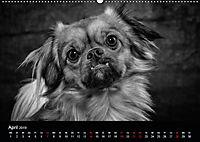 Dogs - Black & White (Wandkalender 2019 DIN A2 quer) - Produktdetailbild 4