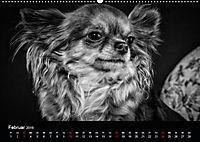 Dogs - Black & White (Wandkalender 2019 DIN A2 quer) - Produktdetailbild 2