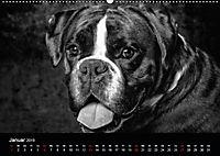 Dogs - Black & White (Wandkalender 2019 DIN A2 quer) - Produktdetailbild 1