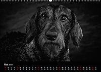 Dogs - Black & White (Wandkalender 2019 DIN A2 quer) - Produktdetailbild 5