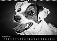 Dogs - Black & White (Wandkalender 2019 DIN A2 quer) - Produktdetailbild 9
