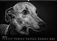 Dogs - Black & White (Wandkalender 2019 DIN A2 quer) - Produktdetailbild 7