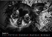 Dogs - Black & White (Wandkalender 2019 DIN A2 quer) - Produktdetailbild 8