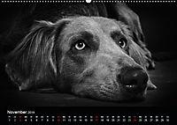 Dogs - Black & White (Wandkalender 2019 DIN A2 quer) - Produktdetailbild 11