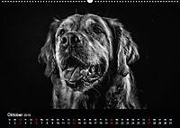 Dogs - Black & White (Wandkalender 2019 DIN A2 quer) - Produktdetailbild 10