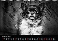 Dogs - Black & White (Wandkalender 2019 DIN A2 quer) - Produktdetailbild 12