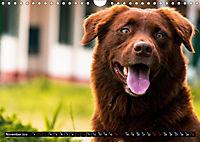 Dogs Dogs Dogs (Wall Calendar 2019 DIN A4 Landscape) - Produktdetailbild 11