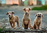 Dogs Dogs Dogs (Wall Calendar 2019 DIN A4 Landscape) - Produktdetailbild 3