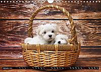Dogs Dogs Dogs (Wall Calendar 2019 DIN A4 Landscape) - Produktdetailbild 1