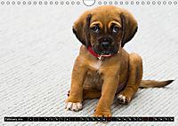 Dogs Dogs Dogs (Wall Calendar 2019 DIN A4 Landscape) - Produktdetailbild 2