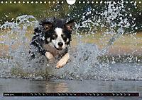 Dogs Dogs Dogs (Wall Calendar 2019 DIN A4 Landscape) - Produktdetailbild 6
