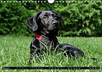 Dogs Dogs Dogs (Wall Calendar 2019 DIN A4 Landscape) - Produktdetailbild 5