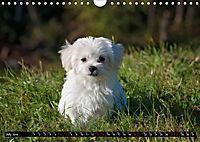 Dogs Dogs Dogs (Wall Calendar 2019 DIN A4 Landscape) - Produktdetailbild 7