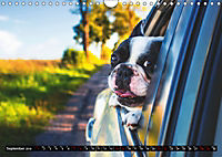 Dogs Dogs Dogs (Wall Calendar 2019 DIN A4 Landscape) - Produktdetailbild 9
