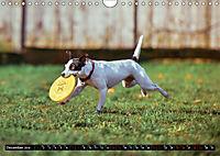 Dogs Dogs Dogs (Wall Calendar 2019 DIN A4 Landscape) - Produktdetailbild 12