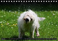 DOG'S DREAM - wovon Hunde träumen (Tischkalender 2019 DIN A5 quer) - Produktdetailbild 6