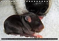 DOG'S DREAM - wovon Hunde träumen (Tischkalender 2019 DIN A5 quer) - Produktdetailbild 11