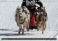 DOG'S DREAM - wovon Hunde träumen (Tischkalender 2019 DIN A5 quer) - Produktdetailbild 12