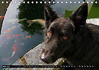 DOG'S DREAM - wovon Hunde träumen (Tischkalender 2019 DIN A5 quer) - Produktdetailbild 3