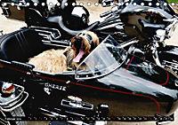 DOG'S DREAM - wovon Hunde träumen (Tischkalender 2019 DIN A5 quer) - Produktdetailbild 2