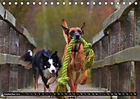 DOG'S DREAM - wovon Hunde träumen (Tischkalender 2019 DIN A5 quer) - Produktdetailbild 9
