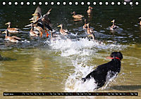 DOG'S DREAM - wovon Hunde träumen (Tischkalender 2019 DIN A5 quer) - Produktdetailbild 4