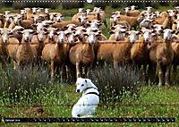 DOG'S DREAM - wovon Hunde träumen (Wandkalender 2019 DIN A2 quer) - Produktdetailbild 1