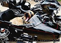 DOG'S DREAM - wovon Hunde träumen (Wandkalender 2019 DIN A2 quer) - Produktdetailbild 2