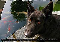 DOG'S DREAM - wovon Hunde träumen (Wandkalender 2019 DIN A2 quer) - Produktdetailbild 3