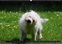 DOG'S DREAM - wovon Hunde träumen (Wandkalender 2019 DIN A2 quer) - Produktdetailbild 6