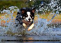 DOG'S DREAM - wovon Hunde träumen (Wandkalender 2019 DIN A2 quer) - Produktdetailbild 8