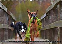 DOG'S DREAM - wovon Hunde träumen (Wandkalender 2019 DIN A3 quer) - Produktdetailbild 9