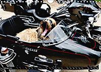 DOG'S DREAM - wovon Hunde träumen (Wandkalender 2019 DIN A4 quer) - Produktdetailbild 2