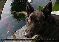 DOG'S DREAM - wovon Hunde träumen (Wandkalender 2019 DIN A4 quer) - Produktdetailbild 3