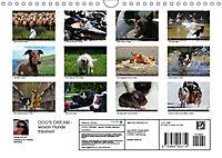 DOG'S DREAM - wovon Hunde träumen (Wandkalender 2019 DIN A4 quer) - Produktdetailbild 13