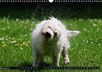 DOG'S DREAM - wovon Hunde träumen (Wandkalender 2019 DIN A3 quer) - Produktdetailbild 6