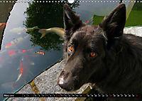 DOG'S DREAM - wovon Hunde träumen (Wandkalender 2019 DIN A3 quer) - Produktdetailbild 3