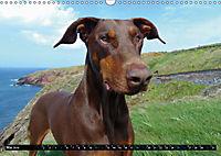 DOG'S DREAM - wovon Hunde träumen (Wandkalender 2019 DIN A3 quer) - Produktdetailbild 5