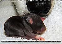 DOG'S DREAM - wovon Hunde träumen (Wandkalender 2019 DIN A3 quer) - Produktdetailbild 11
