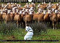 DOG'S DREAM - wovon Hunde träumen (Wandkalender 2019 DIN A4 quer) - Produktdetailbild 1