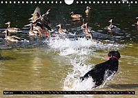 DOG'S DREAM - wovon Hunde träumen (Wandkalender 2019 DIN A4 quer) - Produktdetailbild 4