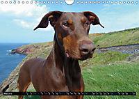 DOG'S DREAM - wovon Hunde träumen (Wandkalender 2019 DIN A4 quer) - Produktdetailbild 5