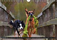 DOG'S DREAM - wovon Hunde träumen (Wandkalender 2019 DIN A4 quer) - Produktdetailbild 9