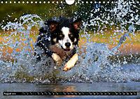 DOG'S DREAM - wovon Hunde träumen (Wandkalender 2019 DIN A4 quer) - Produktdetailbild 8