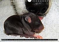 DOG'S DREAM - wovon Hunde träumen (Wandkalender 2019 DIN A4 quer) - Produktdetailbild 11