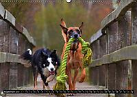 DOG'S DREAM - wovon Hunde träumen (Wandkalender 2019 DIN A2 quer) - Produktdetailbild 9