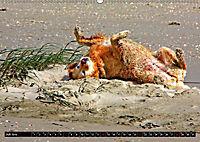 DOG'S DREAM - wovon Hunde träumen (Wandkalender 2019 DIN A2 quer) - Produktdetailbild 7