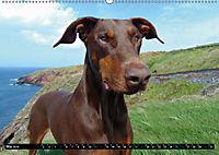 DOG'S DREAM - wovon Hunde träumen (Wandkalender 2019 DIN A2 quer) - Produktdetailbild 5