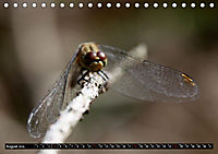 Drachenfliegen und Teufelsnadeln (Tischkalender 2019 DIN A5 quer) - Produktdetailbild 8
